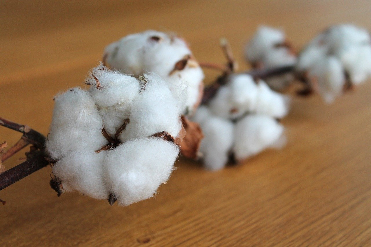Cotton Branch on a wooden table